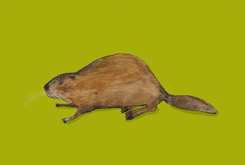 Beaver Taidejuliste