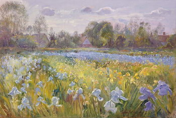 Iris Field in the Evening Light, 1993 Taidejuliste