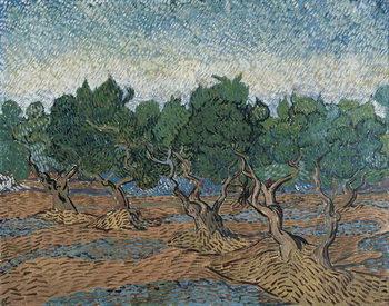 Olive Grove, 1889 Taidejuliste