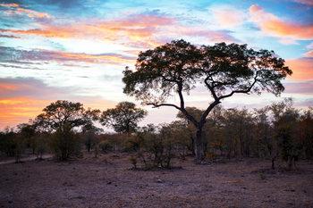 Eksklusiiviset taidevalokuvat Savanna Trees at Sunrise