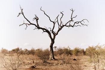 Eksklusiiviset taidevalokuvat Savannah Tree