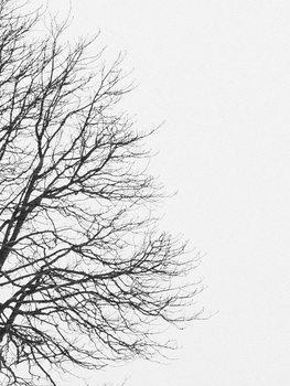 Eksklusiiviset taidevalokuvat tree1