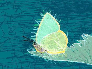 Fine Art Print Beautiful Butterfly, 2019,