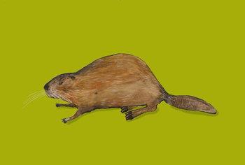 Fine Art Print Beaver