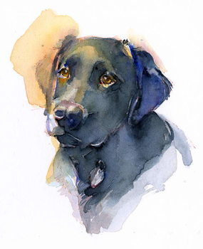 Fine Art Print Black Lab, 2017,