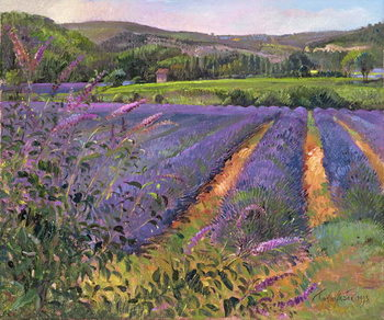 Fine Art Print Buddleia and Lavender Field, Montclus, 1993