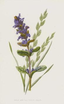 Fine Art Print Bugle and Tall Fescue Grass