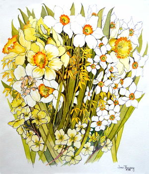 Fine Art Print Daffodils, Narcissus, Forsythia and Primroses, 2000