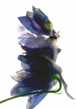 Fine Art Print Delphinium Dance, 2009,