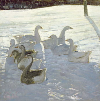 Fine Art Print Geese Against the Light
