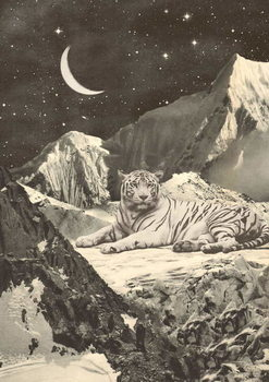 Fine Art Print Giant White Tiger in Mountains