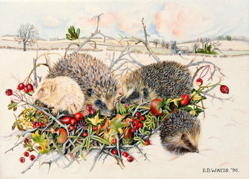 Fine Art Print Hedgehogs in Hedgerow Basket, 1996