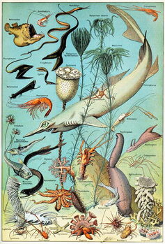 Fine Art Print Illustration of a Deep sea underwater scene  c.1923
