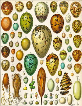Fine Art Print Illustration of Eggs c.1923