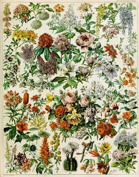 Fine Art Print Illustration of  flowering plants  c.1923