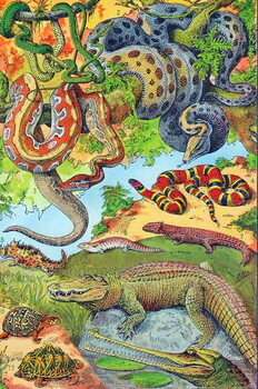 Fine Art Print Illustration of  Reptiles  c.1923