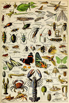 Fine Art Print Illustration of  various Invertebrates  c.1923