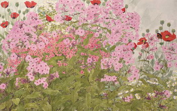 Fine Art Print  Pink Phlox and Poppies with a Butterfly