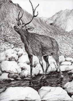 Fine Art Print Stag, 2011,