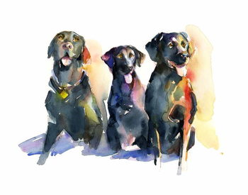 Fine Art Print Three Black Labs, 2015,