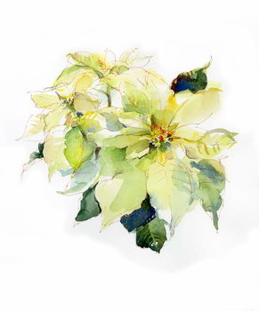 Fine Art Print White Poinsettia, 2014,