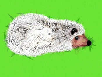 Fine Art Print Wicked Spiky Hedgehog, 2019,