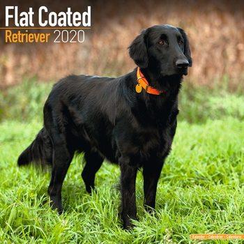 Calendar 2021 Flatcoated Retriever