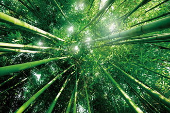 Glass Art Bamboo Forest