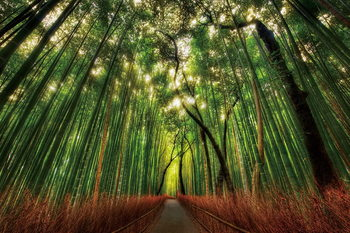 Glass Art Bamboo Forest - Straight Path