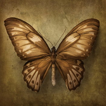 Glass Art Butterfly - Brown