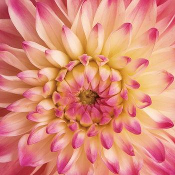 Glass Art Flowers - Pink Gerbera