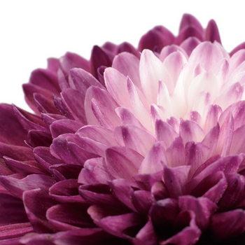 Glass Art Flowers - Purple Gerbera