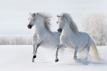 Glass Art Horses - Two White Horses