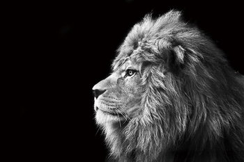 Glass Art Lion - Black and White