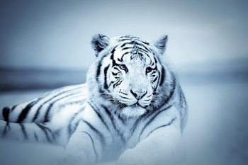 Glass Art Tiger - White Tiger