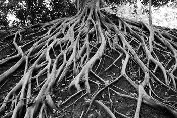 Glass Art Tree - Black and White Roots