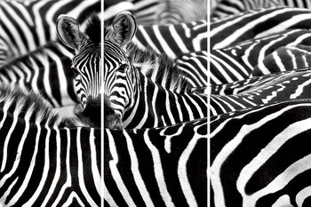 Glass Art  Zebra - Many Zebras