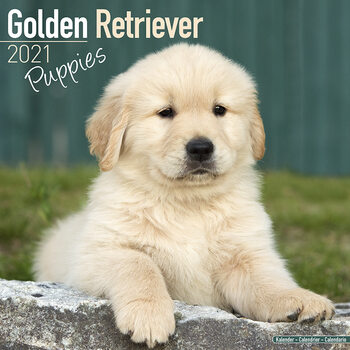 Calendar 2021 Golden Retriever