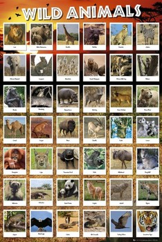 Juliste Animals
