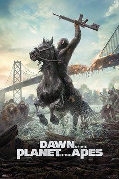 Juliste Apinoiden planeetan vallankumous - Horse
