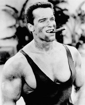 Juliste Arnold Schwarzenegger - Cigar