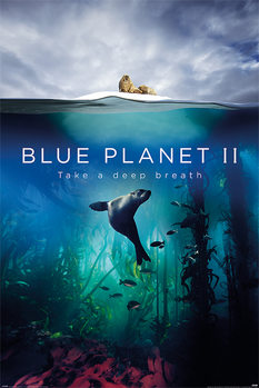 Juliste  Blue Planet 2 - Take A Deep Breath
