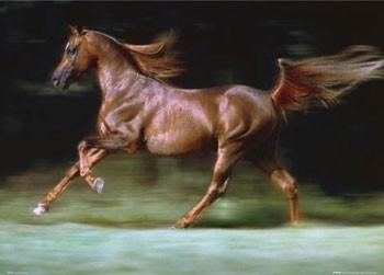 Juliste Brown stallion - horse