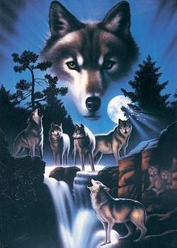 Juliste Celestial wolves