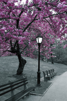 Juliste Central Park - blossom