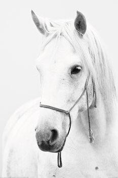 Juliste Hevonen - White Horse