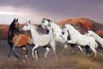 Juliste Horses/dusk - bob langrish