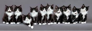 Juliste Keith Kimberlin - 10 norwegian kittens