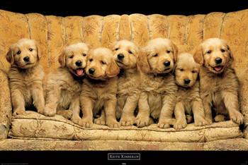 Juliste Keith Kimberlin - golden dogs