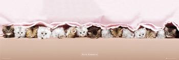 Juliste Keith Kimberlin - kittens